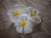 Frangipani on wood — ストック写真