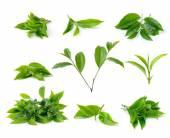 Green tea leaf isolated on white background — Stock Photo