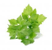 Celery on over white background — Zdjęcie stockowe