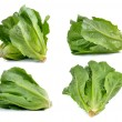 Cos Lettuce on White Background — Stock Photo #70161343