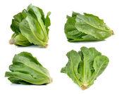 Cos Lettuce on White Background — Stock Photo