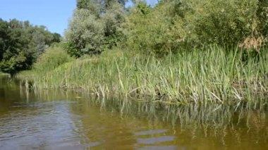 这条河和森林 — 图库视频影像