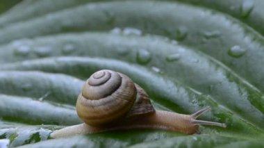 Snail — Stock Video