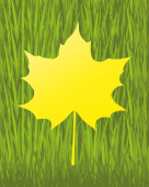 Vector banner. Maple leaf. — 图库矢量图片