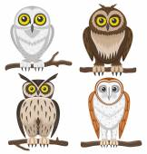Owls on white background. — Stock Vector