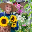 Senior Woman Carrying Baskets of Sunflowers — Stock Photo #68905557