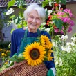 Senior Woman Carrying Baskets of Sunflowers — Stock Photo #68905663