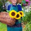 Senior Woman Carrying Baskets of Sunflowers — Stock Photo #68905665