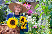 Senior Woman Carrying Baskets of Sunflowers — Stock Photo