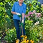 Elderly Woman Cultivating Garden — Stock Photo #74087197