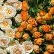 Yellow and white roses — Stock Photo #53675729