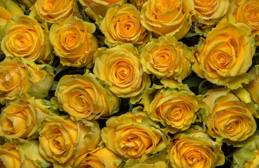 strau frisch geschnitten gro e gelbe rosen stockfoto 53675649. Black Bedroom Furniture Sets. Home Design Ideas