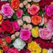 multicolored roses — Stock Photo #53944373