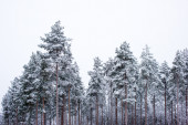 Winter scenery from forest — Foto Stock