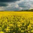 Field before storm — Stock Photo #59099861