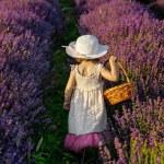 Lavender girl — Stock Photo #62333379