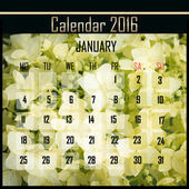Floral 2016 calendar design for january — Stock Photo