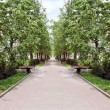 Beautiful avenue with green trees and bench in summer sunny day — Stock Photo #60126273