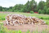 Big pile of birch wood in clearing surrounded by fence and green — Stock Photo