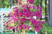 Beautiful pink flowers in forged gilt vase in summer sunny park — Stock Photo