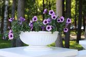 Beautiful purple flowers in flowerpot in park at summer sunny da — Stock Photo