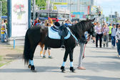 PERM, RUSSIA - JUN 6, 2014: Black horse stands on street during  — Foto Stock