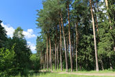 Footpath, green grass and tall trees in forest — Stok fotoğraf