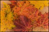 秋天的叶子在木制背景 — 图库照片