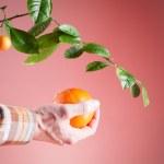 Orange, harvest oranges — Stock Photo #75783089
