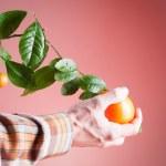 Orange, harvest oranges — Stock Photo #75783107