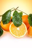Oranžové plody stromu větvičku — Stock fotografie