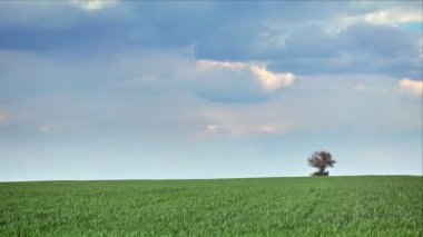 Lonely tree on sky background, time lapse — Stock Video