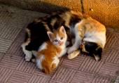 A mama cat — Stock Photo