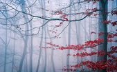 Tree in the misty autumn forest — Stock Photo