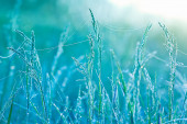 Grass with water drops — Stock Photo