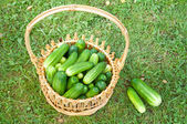 Cucumbers on the basket — Stock Photo