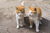 Two cats — Stock Photo