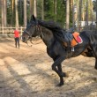 Saddled black stallion racing on a training field with a blurred person on the background — Stock Photo #72879037