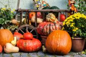 Halloween pumpkins on the street — Stock Photo