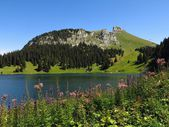 Wildflowers, lake Oberstockensee and Stockhorn — Stock Photo