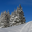 Firs and ski slope — Stock Photo #62448543