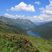 Alpenrosen, lake Arnensee and mountains — Stock Photo