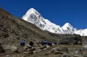 Yak caravan comming from Everest Base Camp and snow covered Pumo Ri — Stock Photo