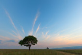 Lonetree at Blue Hour — Stock Photo