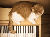 Red sad cat lies on the piano at home — Stock Photo