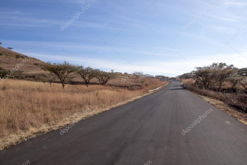 Newly Laid Asphalt Road Lined with Thorn Trees, South Africa ...