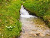 Corredeiras no córrego da montanha, num prado primavera dos Alpes. tempo frio nublado e chuvoso. — Fotografia Stock