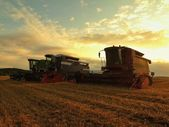 With the sun hanging low on the horizon, a combine harvest wheat in the middle of a farm field.  Morning yellow wheat field on the sunset cloudy orange sky background. — Stock Photo