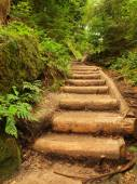Old wooden stairs in overgrown forest garden, tourist footpath. Steps from cut beech trunks, fresh green branches above footpath — Stock Photo