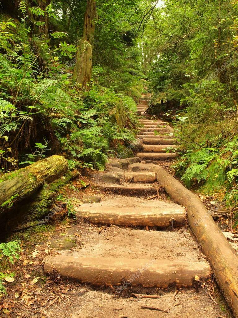 escada jardim madeira:Escada de madeira velha no jardim, vereda de turista floresta